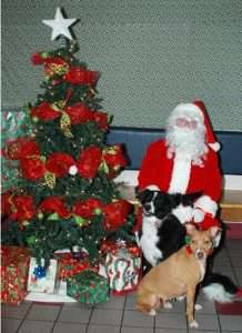 dogs next to christmas tree and santa claus