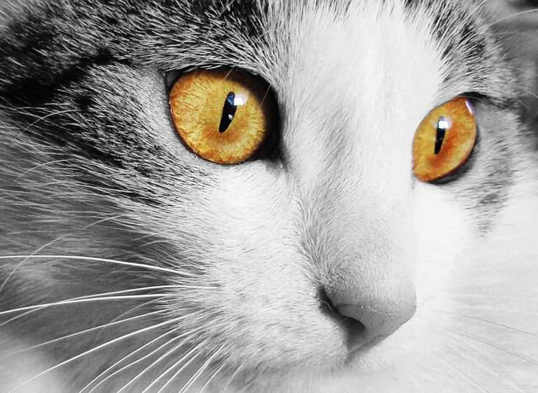 close up of cats eyes