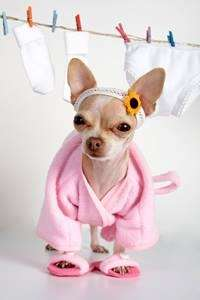 Dog in Pink Robe